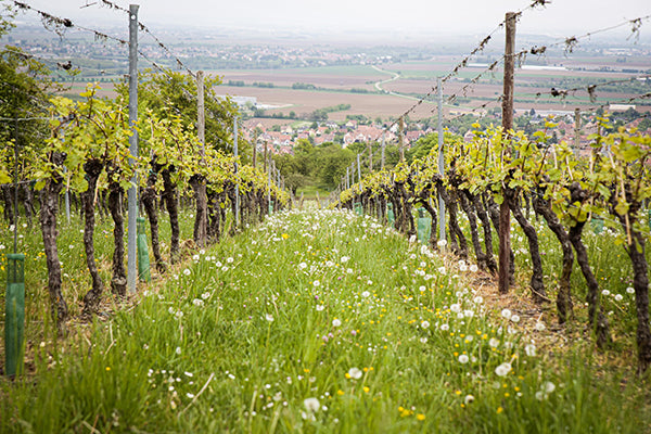 The rolling hills of Beaujolais offer diverse terroirs.