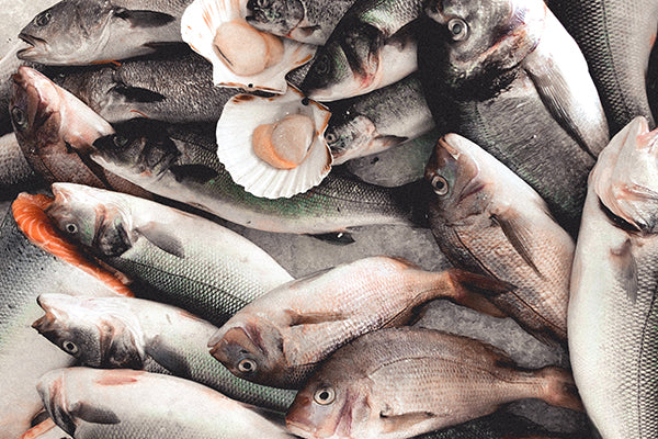 All types of seafood are freshly preserved as canned conserva from fish to shellfish, roe to caviar.
