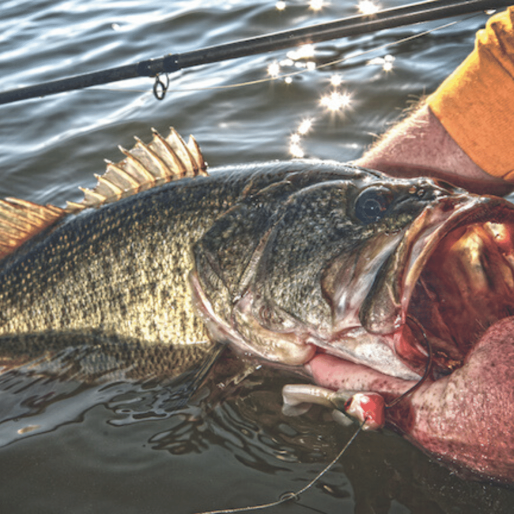 Texas Bass Fishing Guide: Tips, Tricks, and the Best Spots to Fish