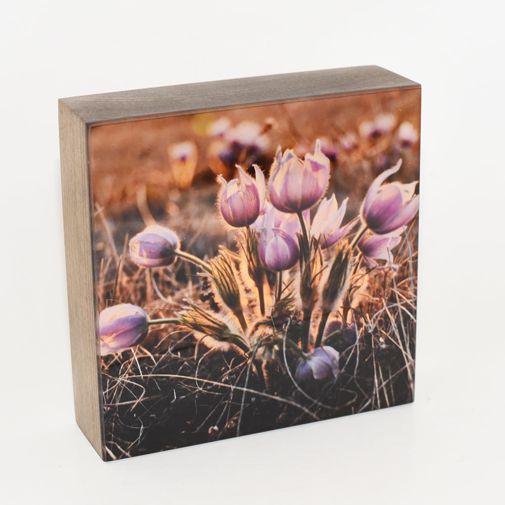 Bouquet Crocus, 5x5 Photo Block