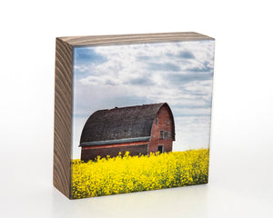 Round Barn In Canola 5x5 Photo Block