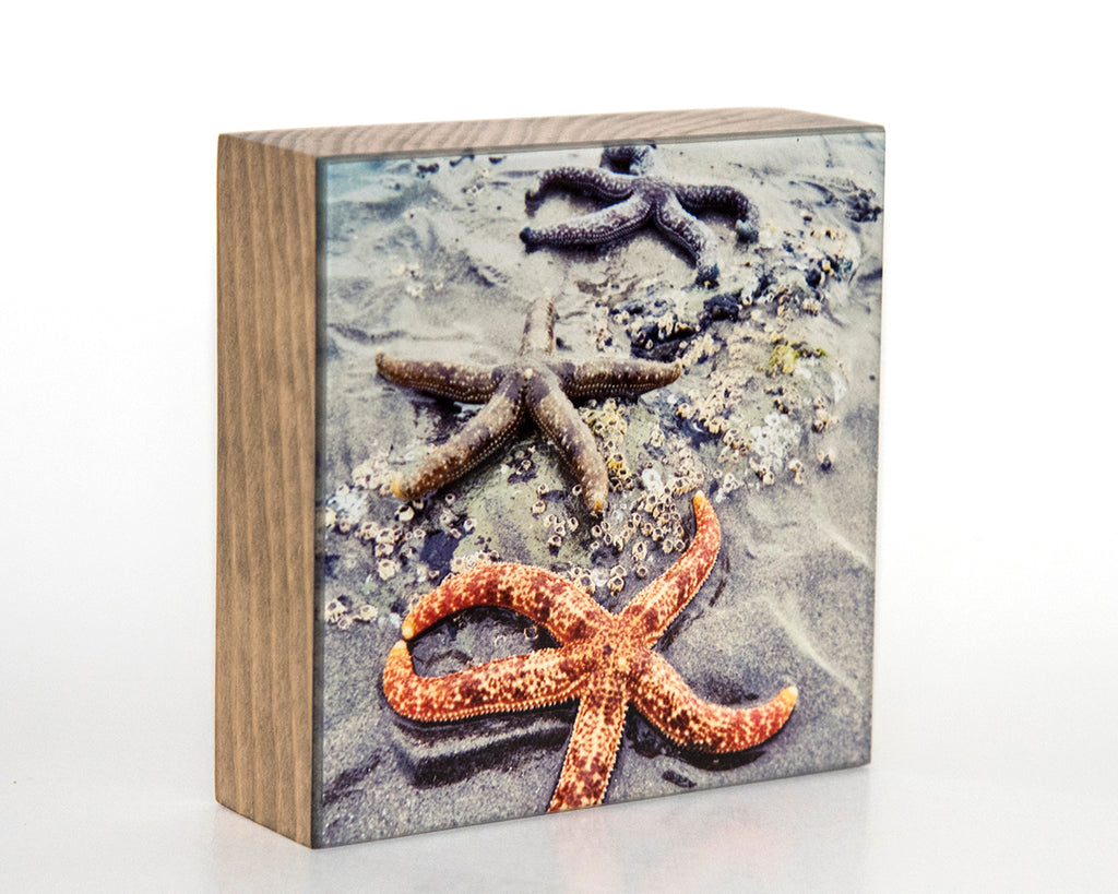 Starfish 5x5 Photo Block