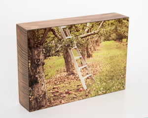 Apple Orchard 5x7 Photo Block