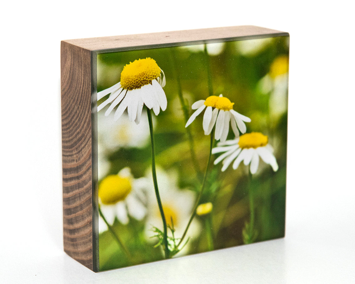 Daisy Love 5x5 Photo Block