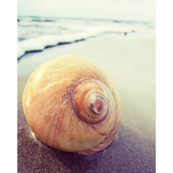 Snail Sea Shell