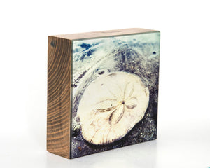 Sand Dollar 5x5 Photo Block