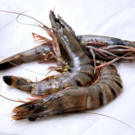 HOSO Black Tiger Prawn/黑虎虾 - Fish-Girl.com