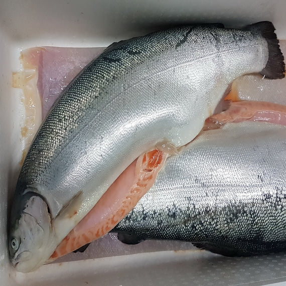 Air-Flown Fresh Salmon Trout (Whole)/空运新鲜鳟鱼 (整条) - Fish-Girl.com