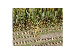 JL23289 Juweela Maize Plants Brown 50 Pcs