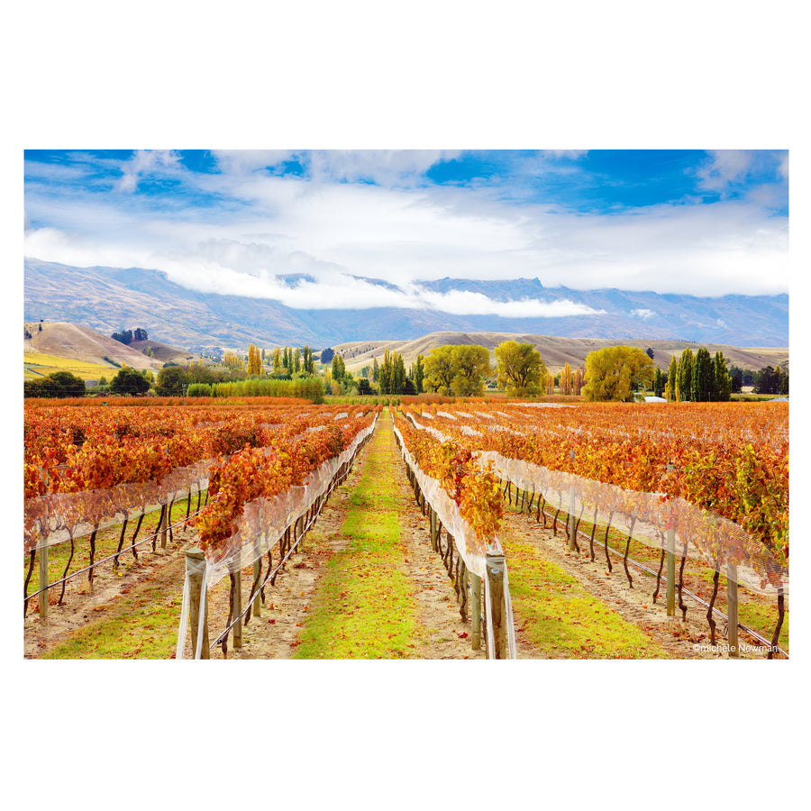 landscape photo of a cromwell vineyard grape vines in autumn, Central Otago, New Zealand by Michele Newman Photographer