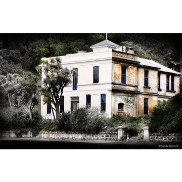 photo dandie dinmont the white house otago peninsula dunedin new zealand ©michele newman starfish photos