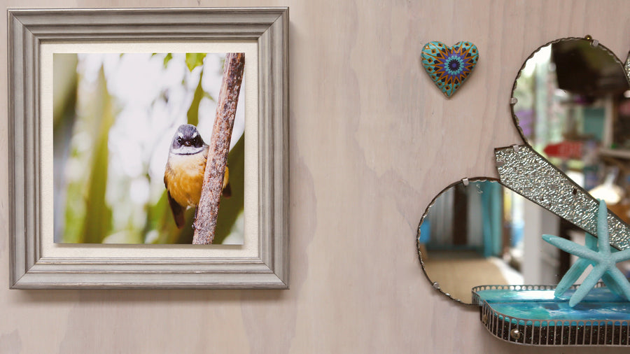 Limited Edition - NZ Fantail framed
