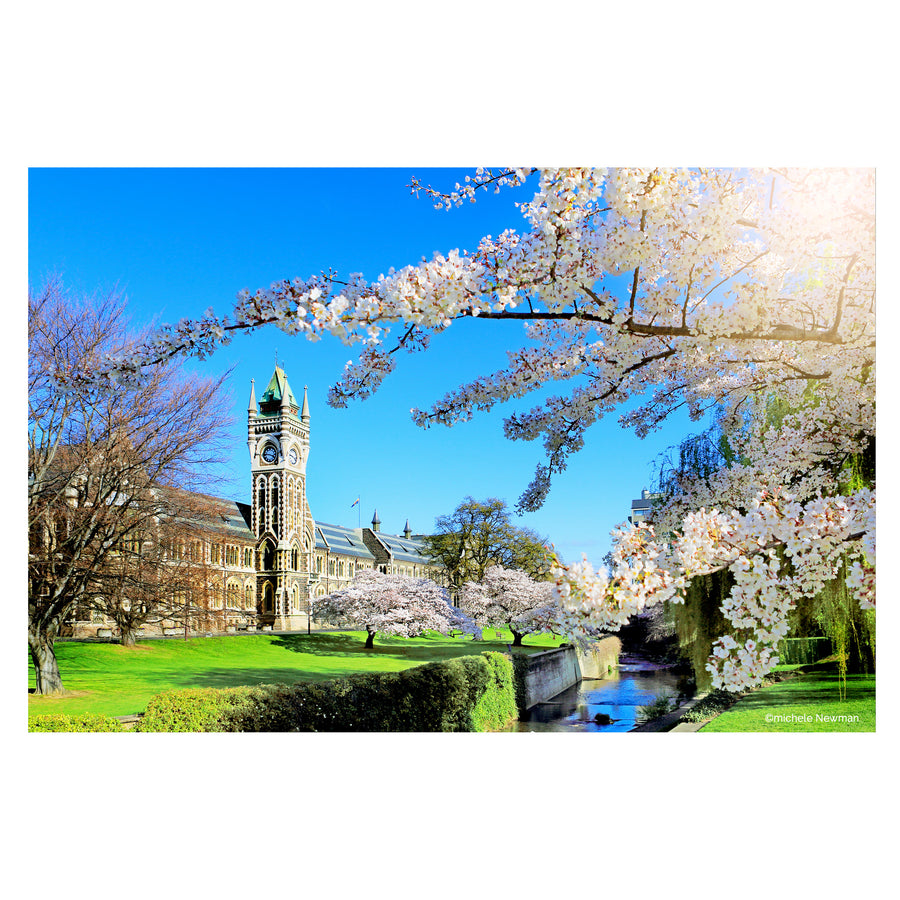 photo otago university registry clock tower blossom, dunedin, new zealand