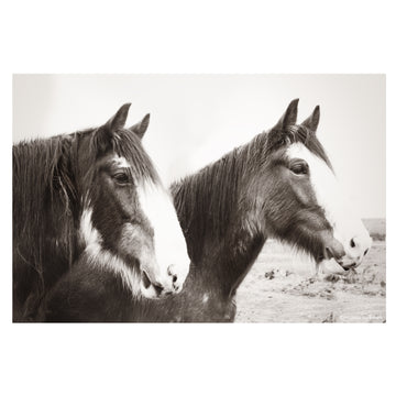 two clydesdale horses middlemarch dunedin otago new zealand