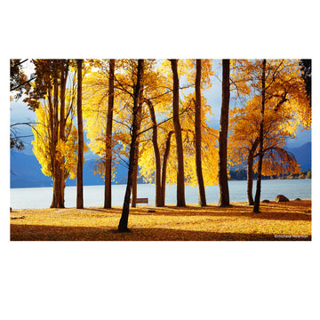 photo lake wanaka trees in autumn, central otago, new zealand