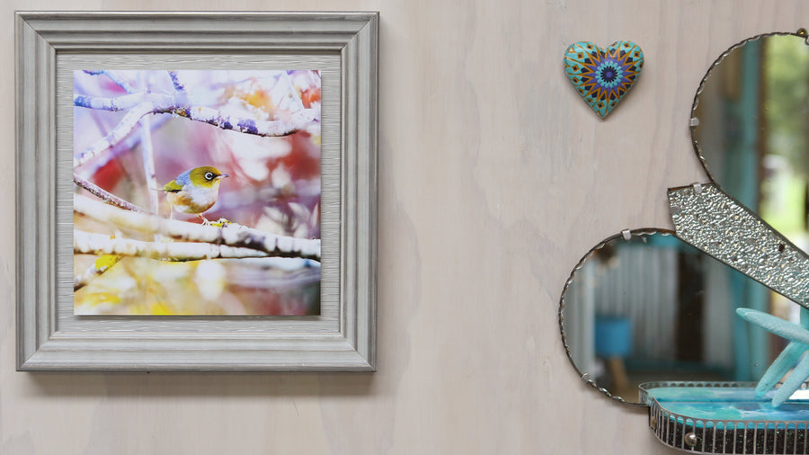 Limited Edition - Waxeye (Silvereye) framed