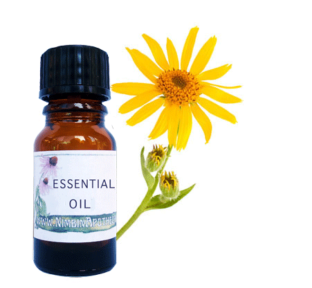 Arnica infused oil for muscles tendons and joints
