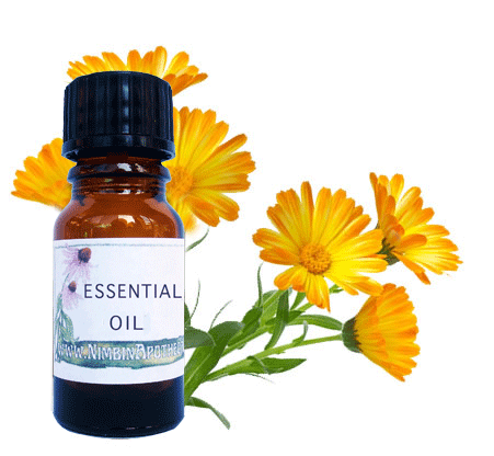 calendula oil has wound healing and antibacterial properties
