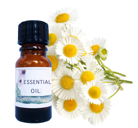 Nimbin apothecary sells chamomile oil to soothe and relax