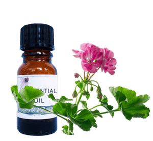 Nimbin apothecary sells rose geranium oil online, reviving and cleansing the skin