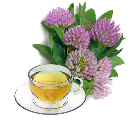 Nimbin apothecary sells red clover flowers online, good for detoxification