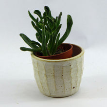 Load image into Gallery viewer, Pure small planter stripe