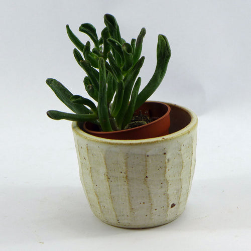 Pure small planter stripe