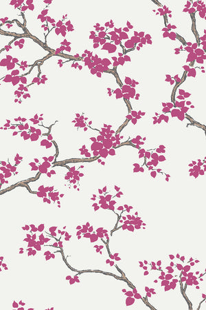 Branches Wallpaper - Cherry