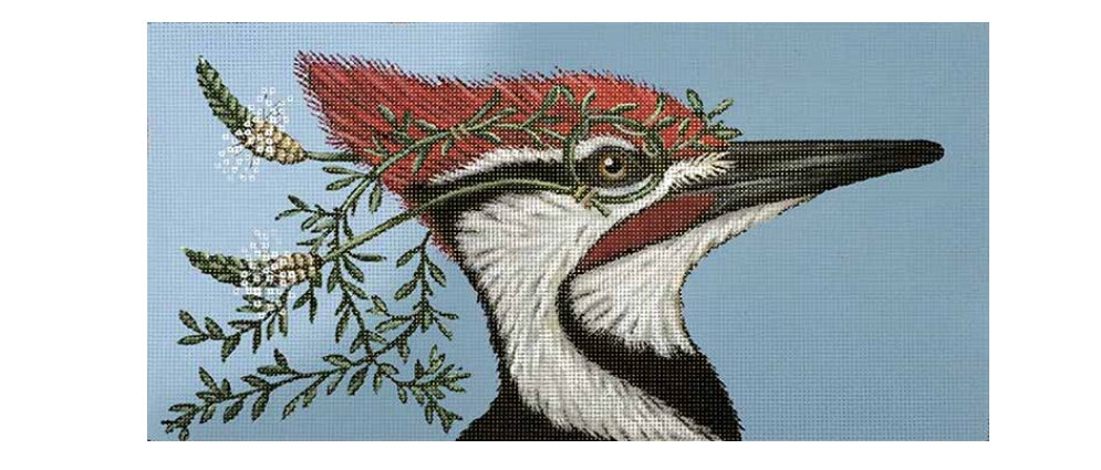 Monocled Woodpecker