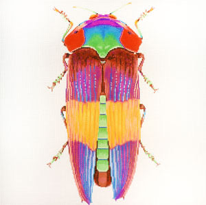 Big Bug Rainbow