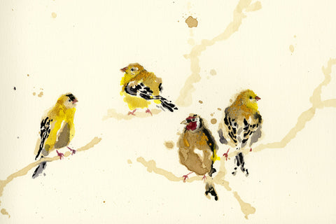 A Charm of Finches By Anna Wright - LEOFRAMES