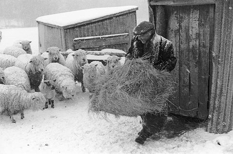 James Ravilious -  A Feed in the Blizzard