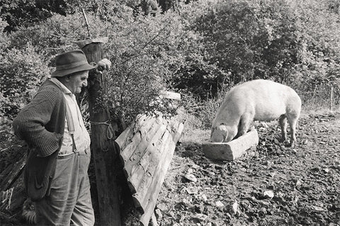 James Ravilious - Eating from a Trough