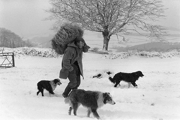 James Ravilious With Dogs In The Snow Leoframes