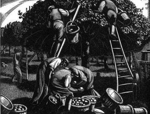 Clare Leighton - September: Apple Picking - LEOFRAMES