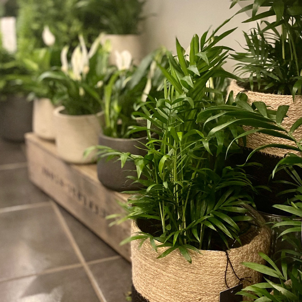 Houseplant selection- weekly pick