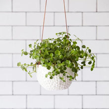 Load image into Gallery viewer, Burgon & Ball 'Dot' Hanging Plant Pot