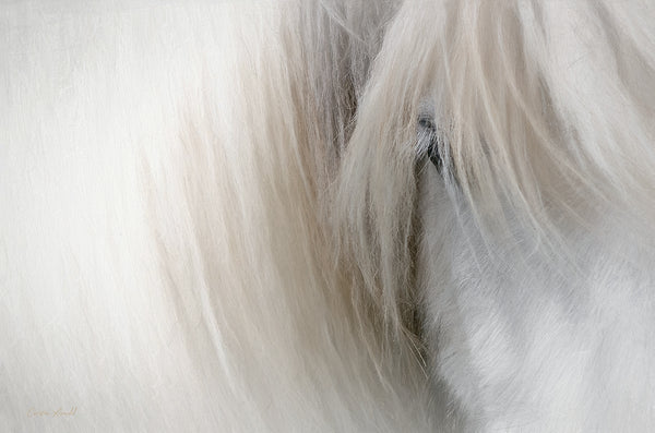 Icelandic Horse Mane and Eye Closeup