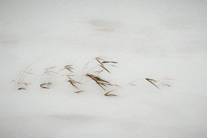 Snow Drifted Grass Abstract