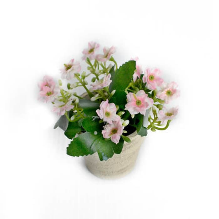 Mini Milan Flowers In PPR Pot-Pi