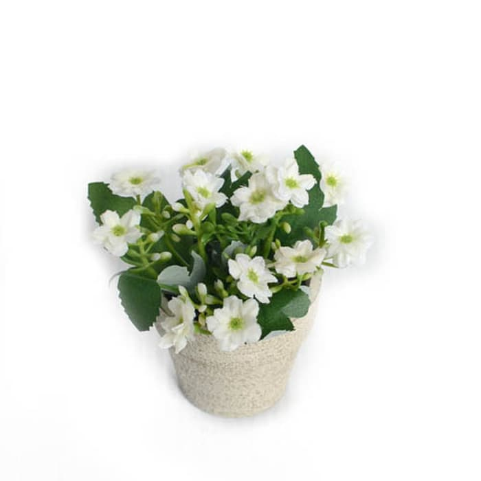 Mini Milan Flowers In PPR Pot-Wh