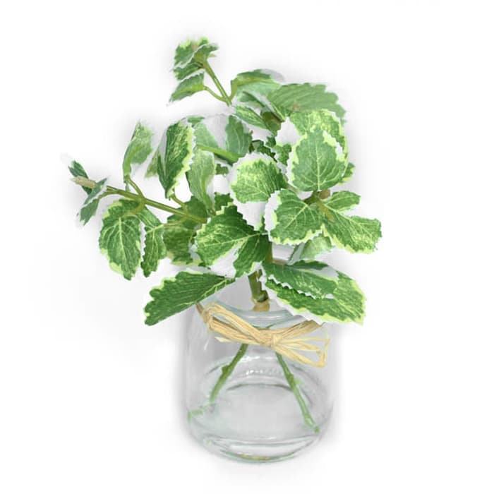 Leaves Vase Water