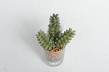Succulent In Mini Glass Tall