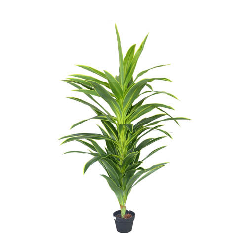 POT Plant Big Dracaena Tree 1.6m
