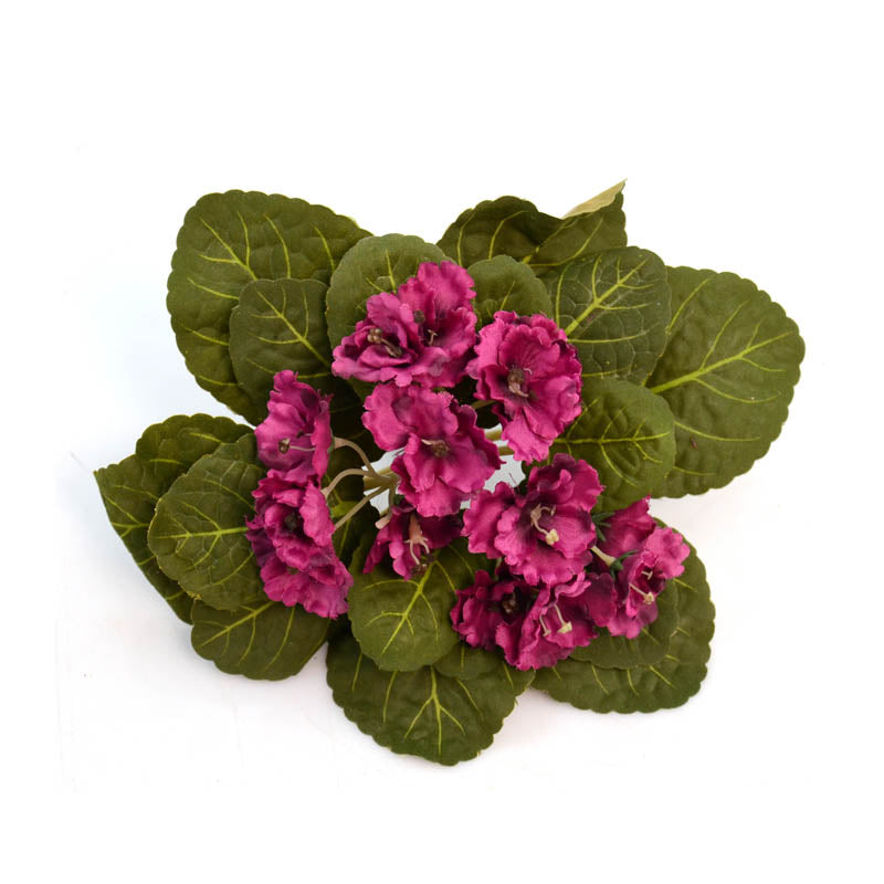 African Violet Bunch Pu