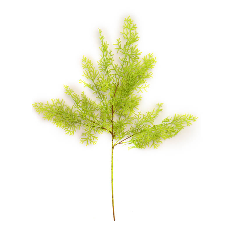 Cypress Leaf SGL GREEN