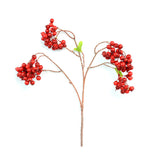 Acacia Berry Cluster Red