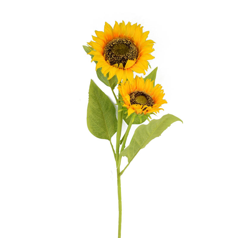 Sunflower Long x3 Ly