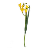 Sgl Freesia 59Cm Lemon
