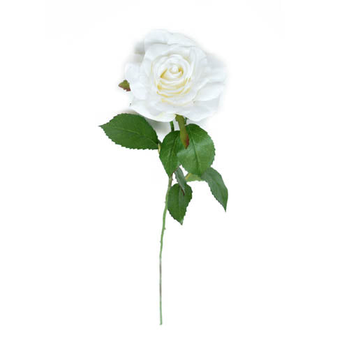 Rose Puloying White-B813BEP